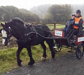 Horse and carriage experience at Calvert Trust, Exmoor